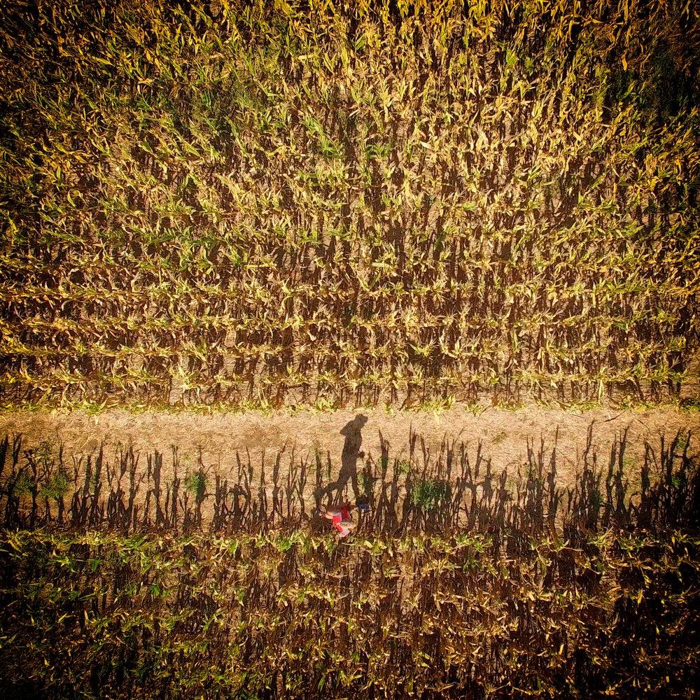 running in field.jpg