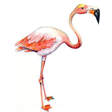 Flamingo Square.jpg