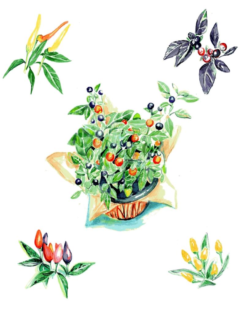 pepper plant print.jpg