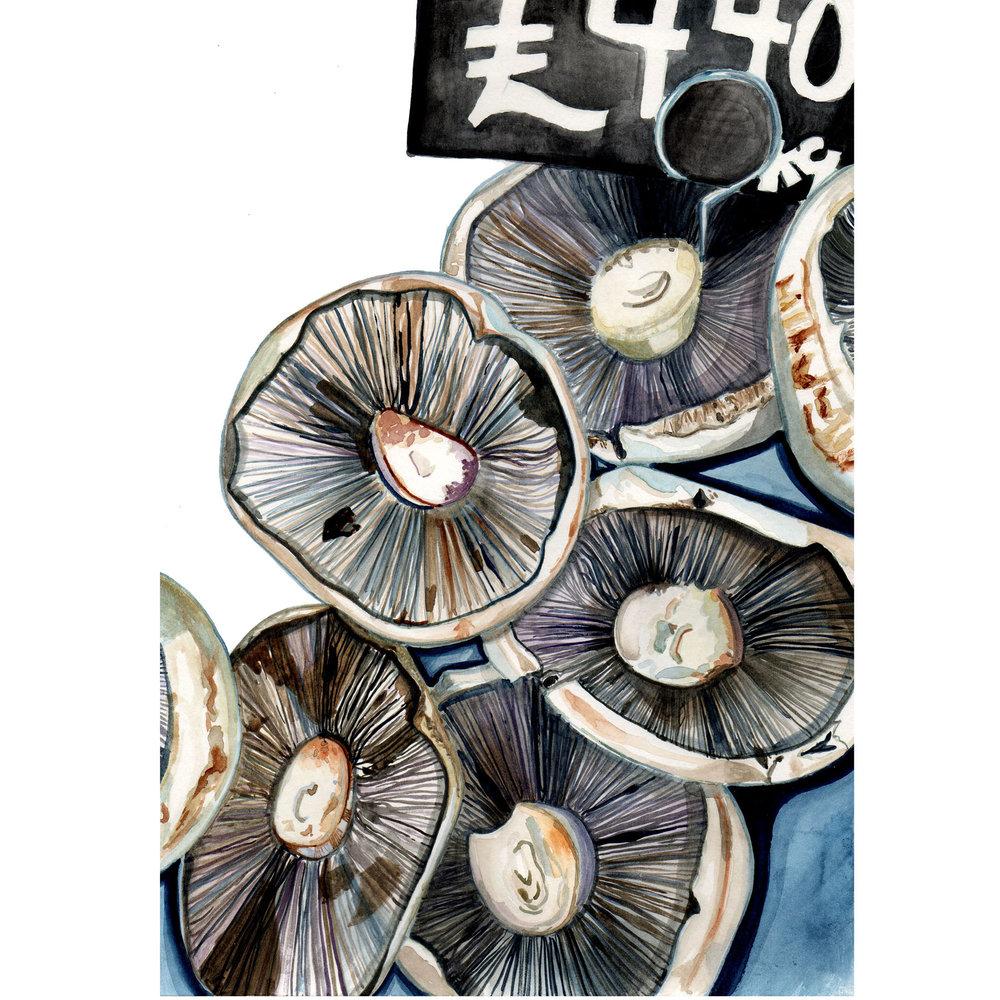 Mushrooms RGB Web copy.jpg