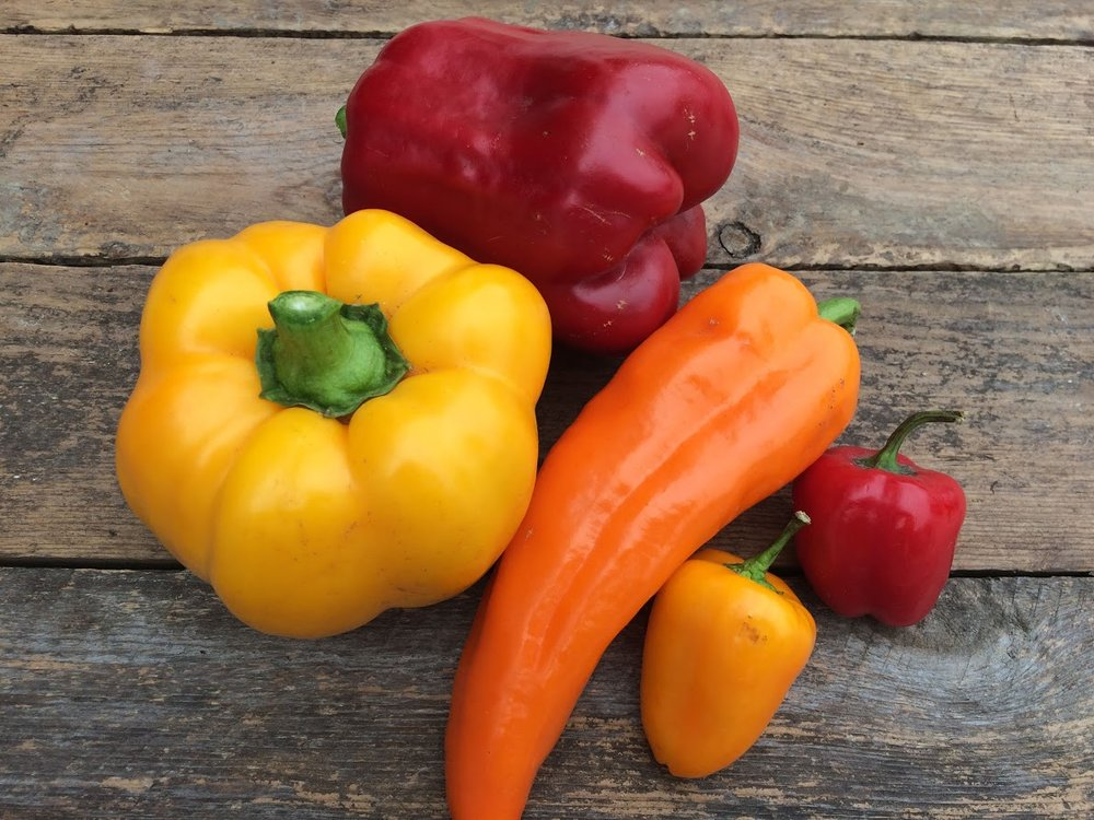 Colored peppers.JPG