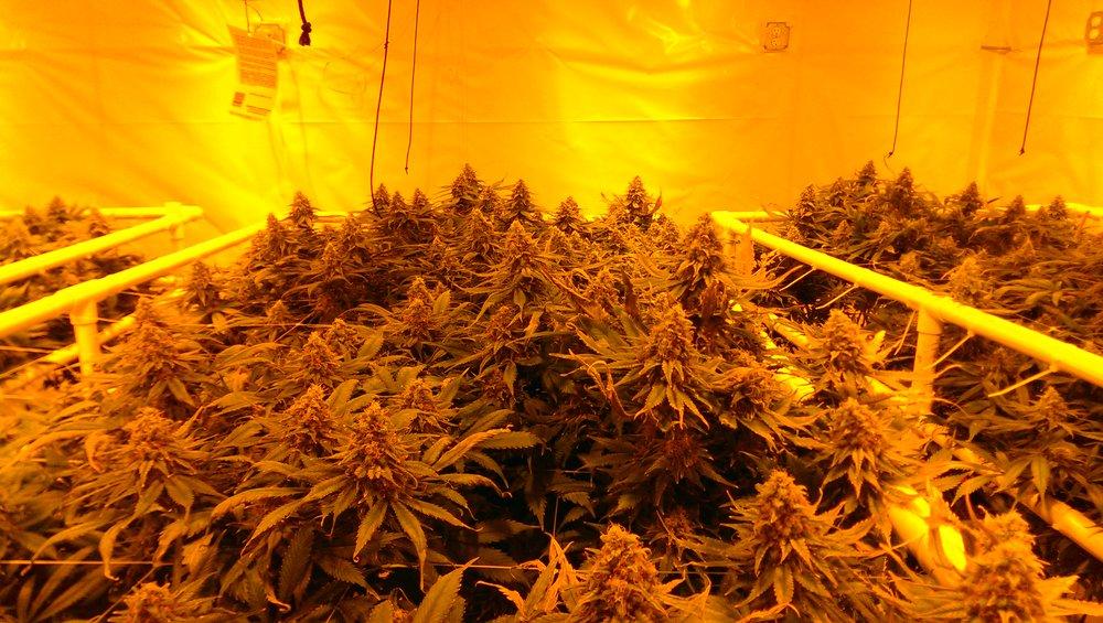 Harka Architecture_Cannabis Marijuana Grows (3).jpg