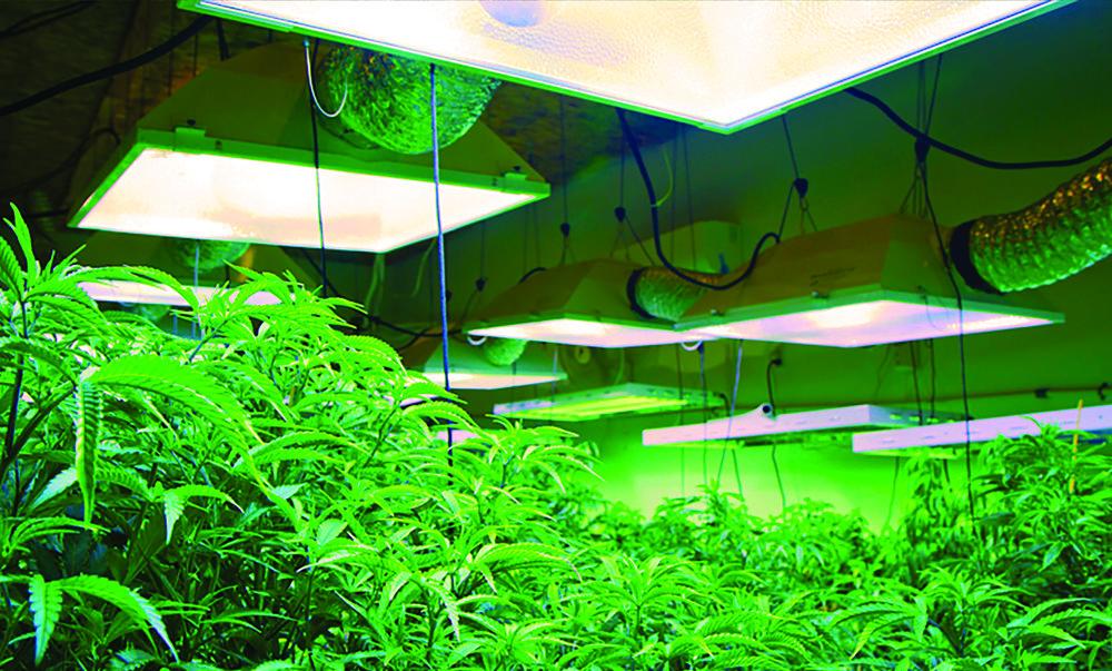 Harka Architecture_Cannabis Marijuana Grows (17).jpg