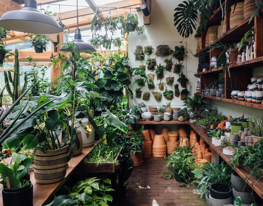 Harka Architecture_Pistils Nursery_Solarium_Conservatory (22).jpg