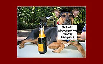 Ginger, The Enforcer | Education: School of hard knocks! | Breed: Australian Kelpie
