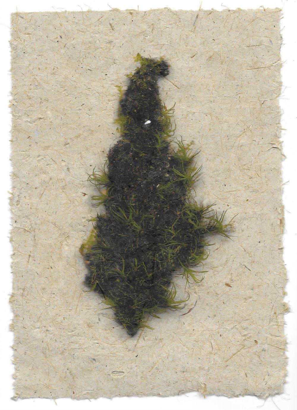 moss specimen #2