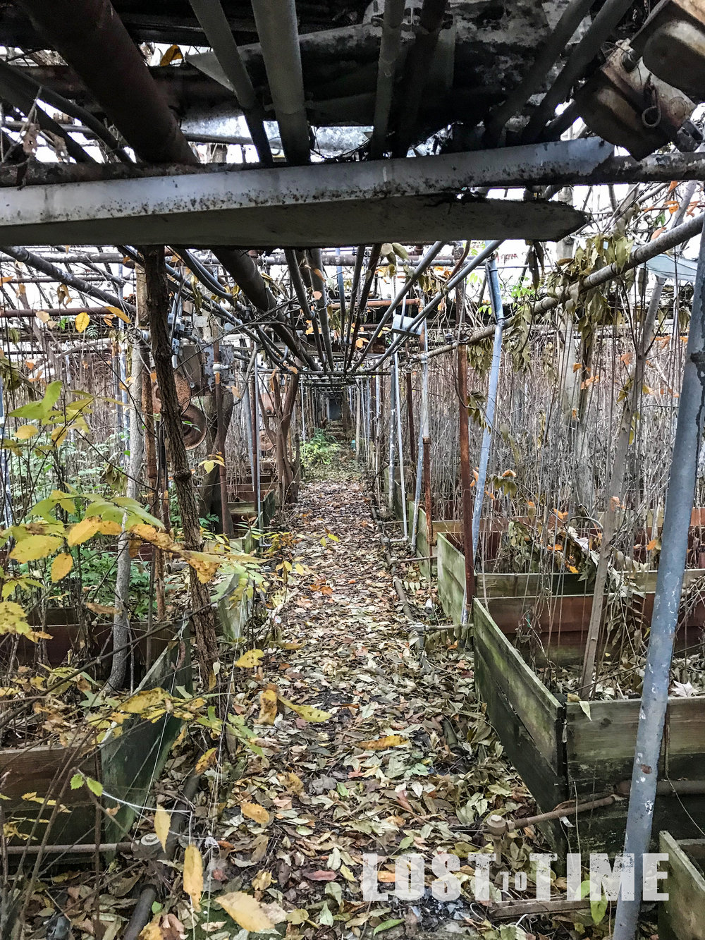 LOSTtoTIME Lake County Greenhouse Nov 13 - 14-2.jpg
