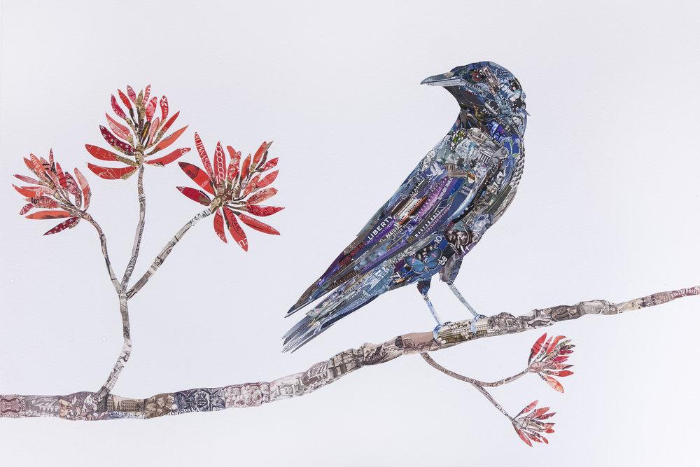 Crow, 2016