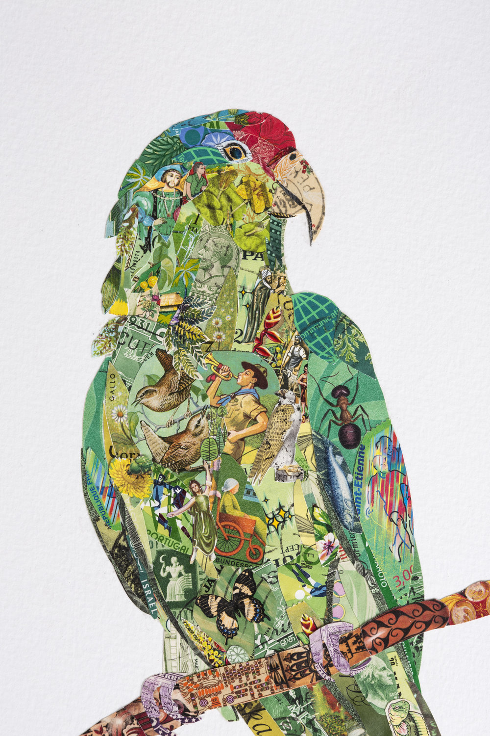 Red Crowned Parrot, (detail)