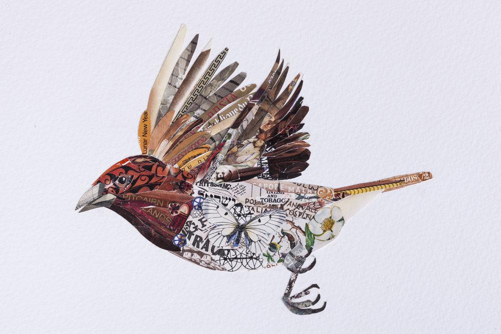 Nutmeg Mannikins (detail)