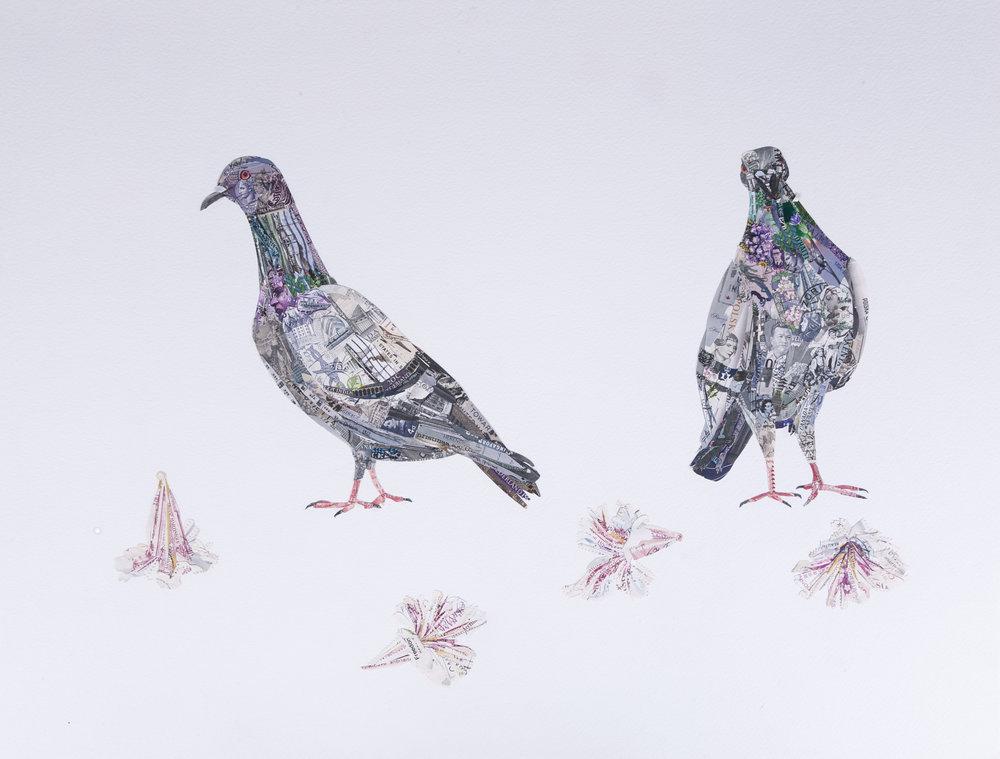 Pigeons, 2016