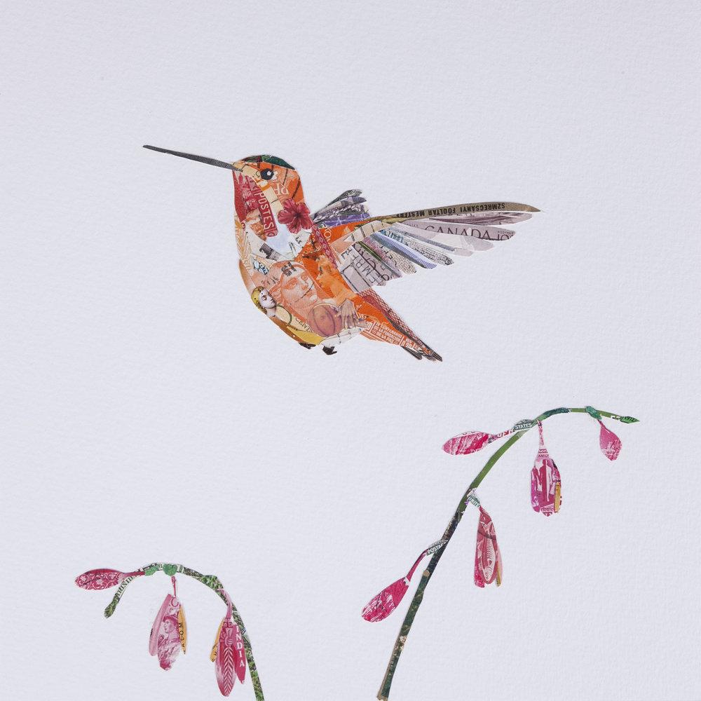 Allen's Hummingbird #6, 2016