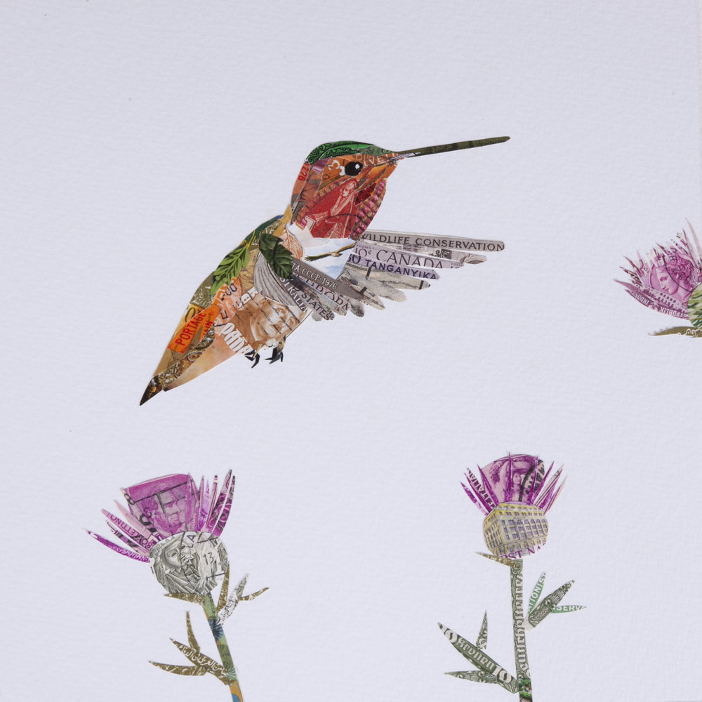 Allen's Hummingbird # 3, 2016