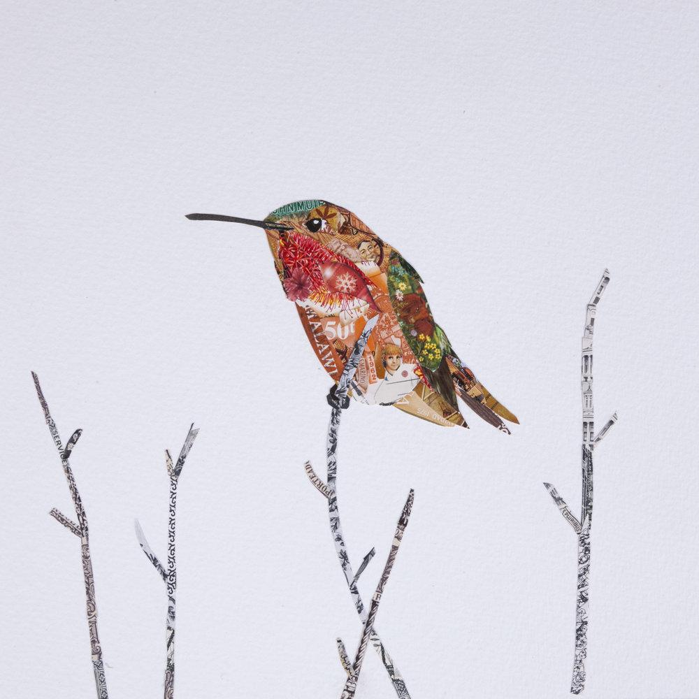 Allen's Hummingbird #5, 2016