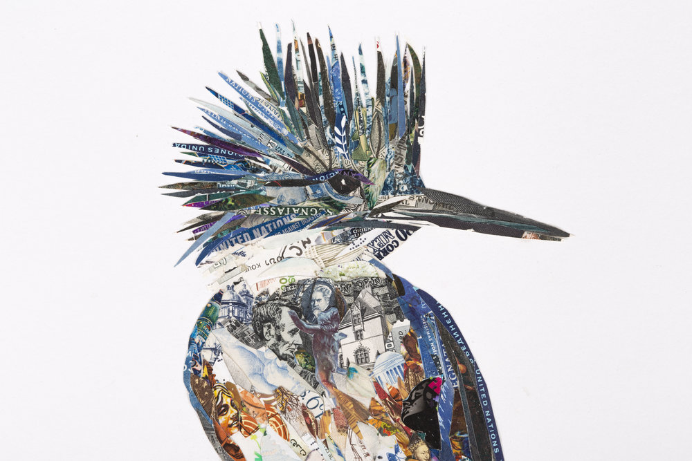 Belted Kingfisher (detail)