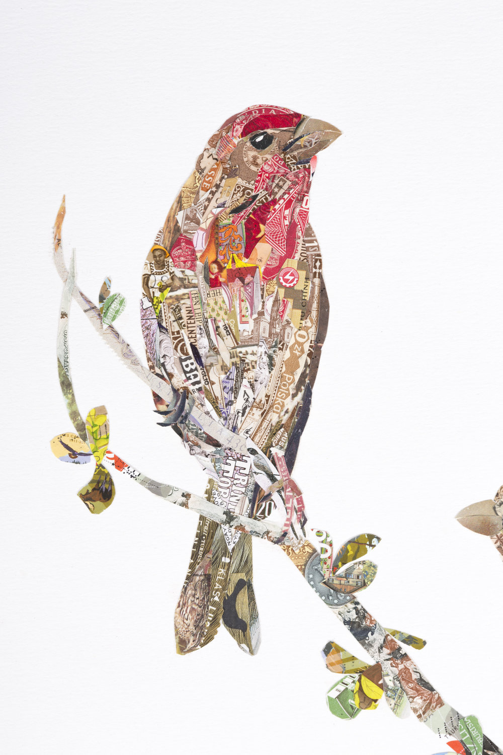 House Finches #2 (detail)