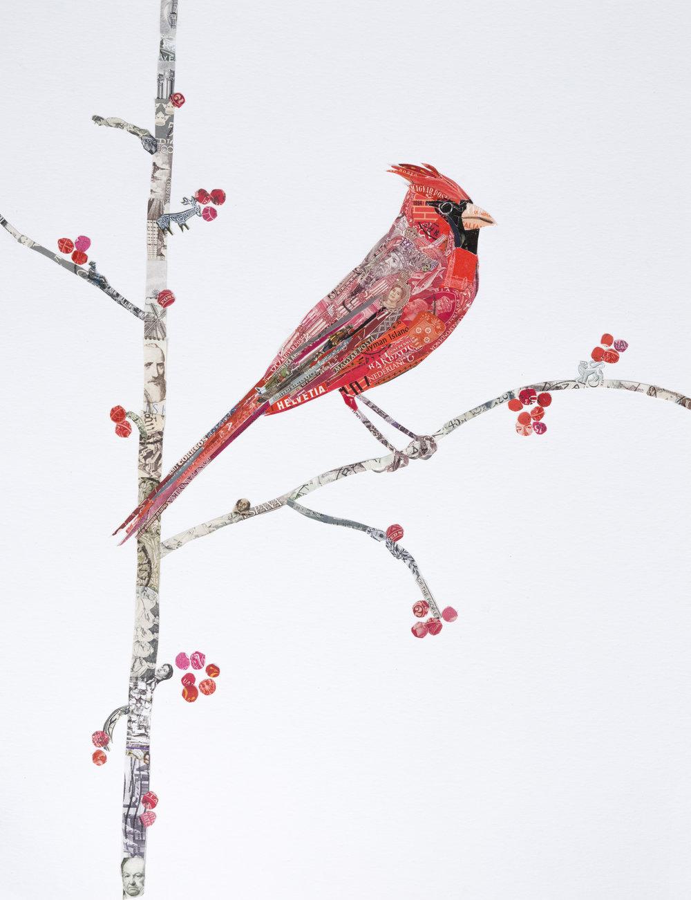 Cardinal, 2017