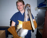 Pelican Pelican with a fish hook in its beak was brought to Montclair Vet Hospital, examined, treated, and then transferred to a local wildlife rescue center for rehabilitation and release.