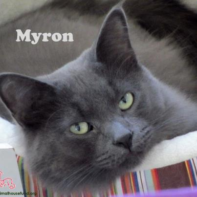 Myron the Cat