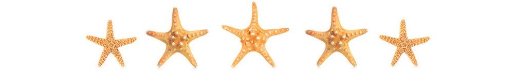 starfishB.jpg