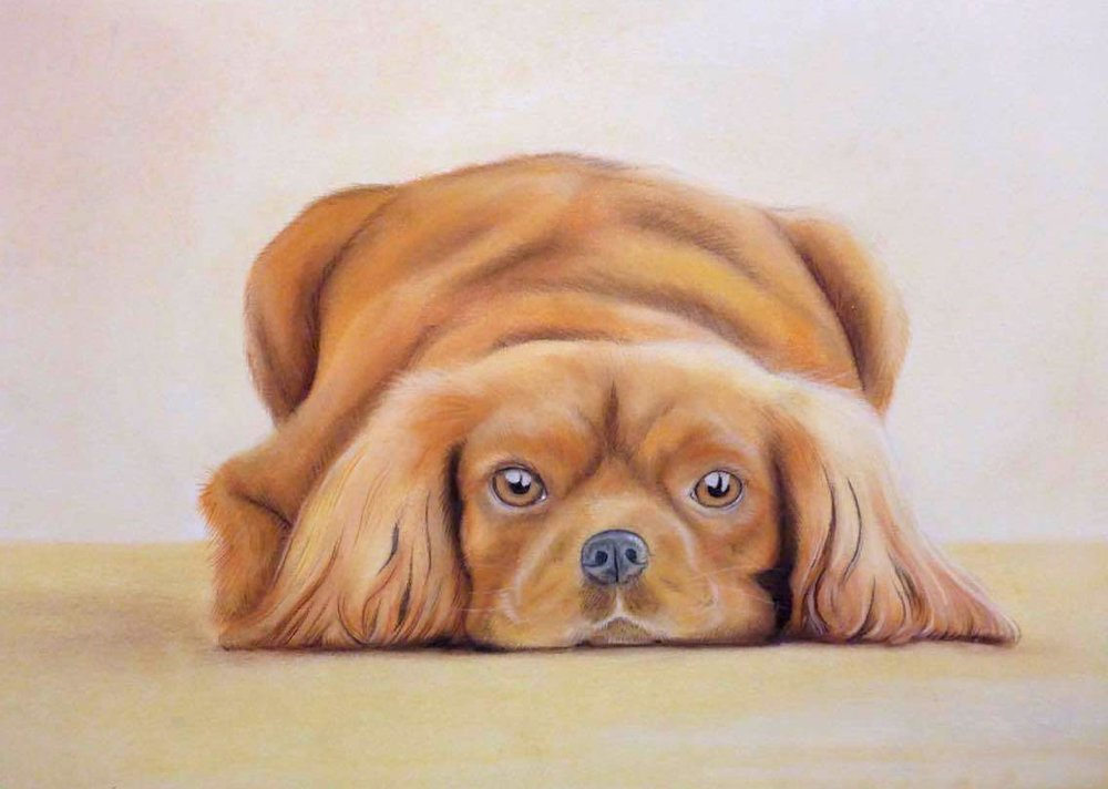 Chalk Pastel pet portrait by Paula Formosa A3 ($450) sold
