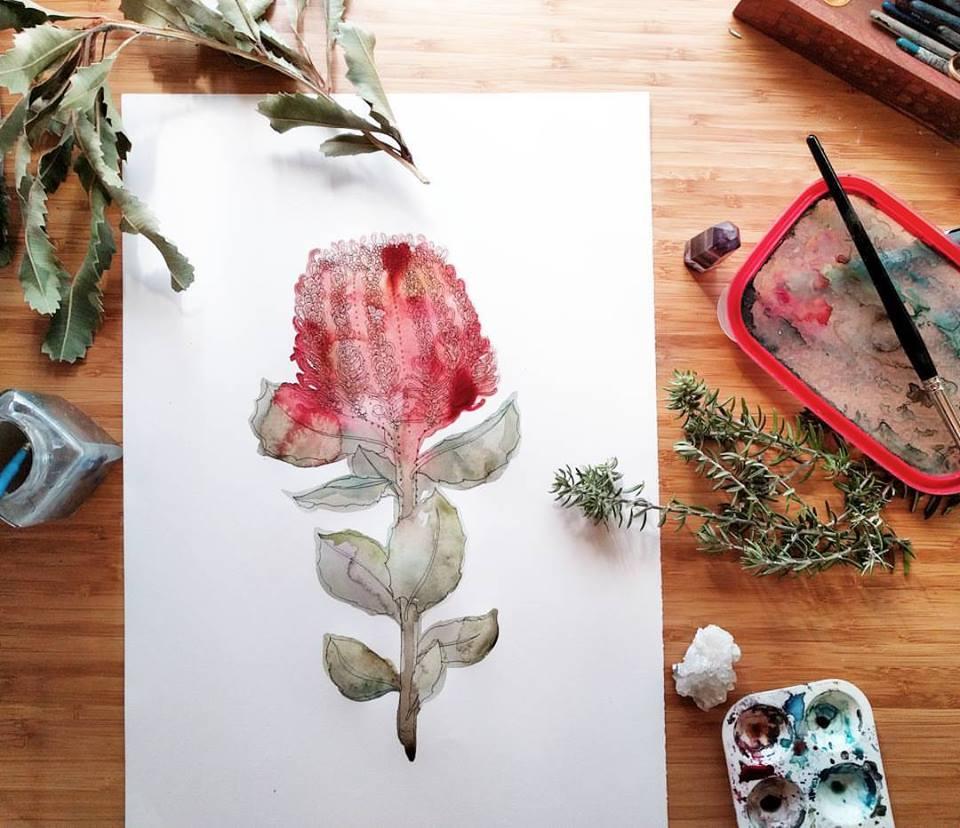 waratah wattle flower