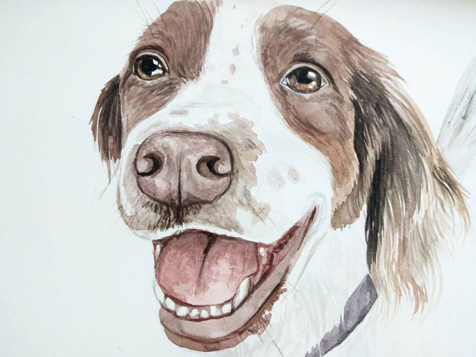 dog border collie pet portrait watercolour paula formosa