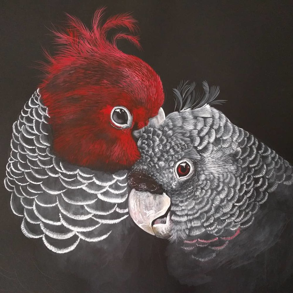 Gang Gang Cockatoos. Watercolour painting in progress. 2018. By Paula Formosa