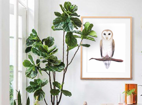fiddle leaf interior design barn owl watercolour.jpg