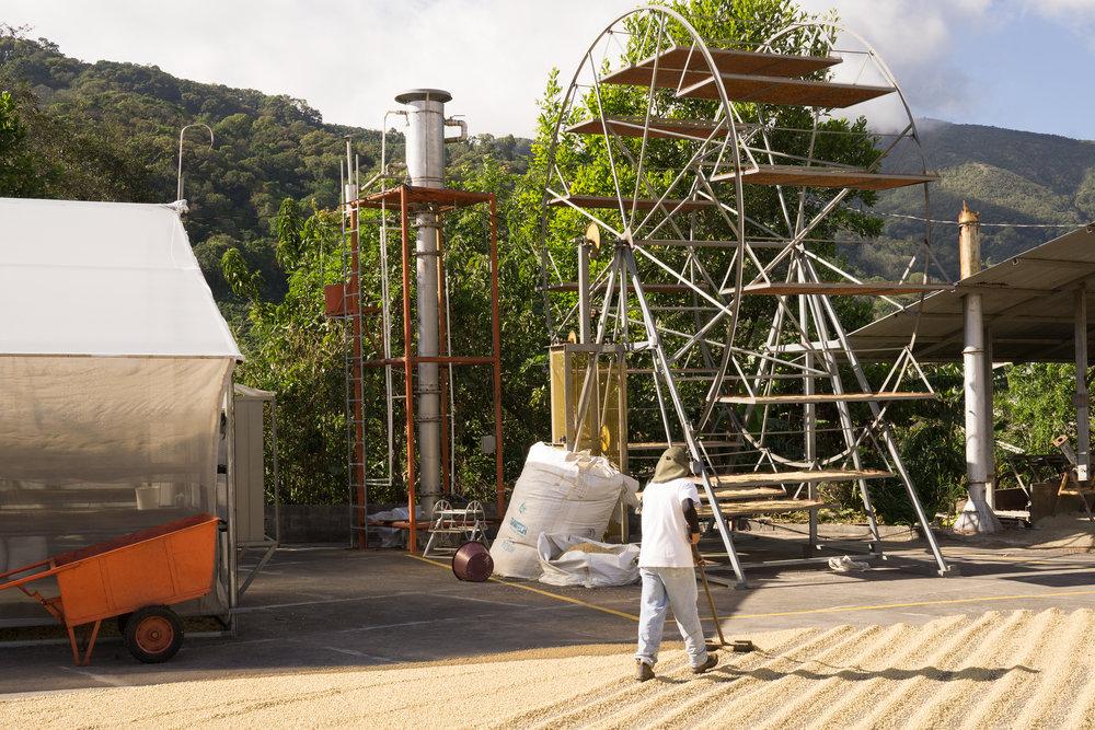 Coffee drying, Tarrazu, Costa Rica