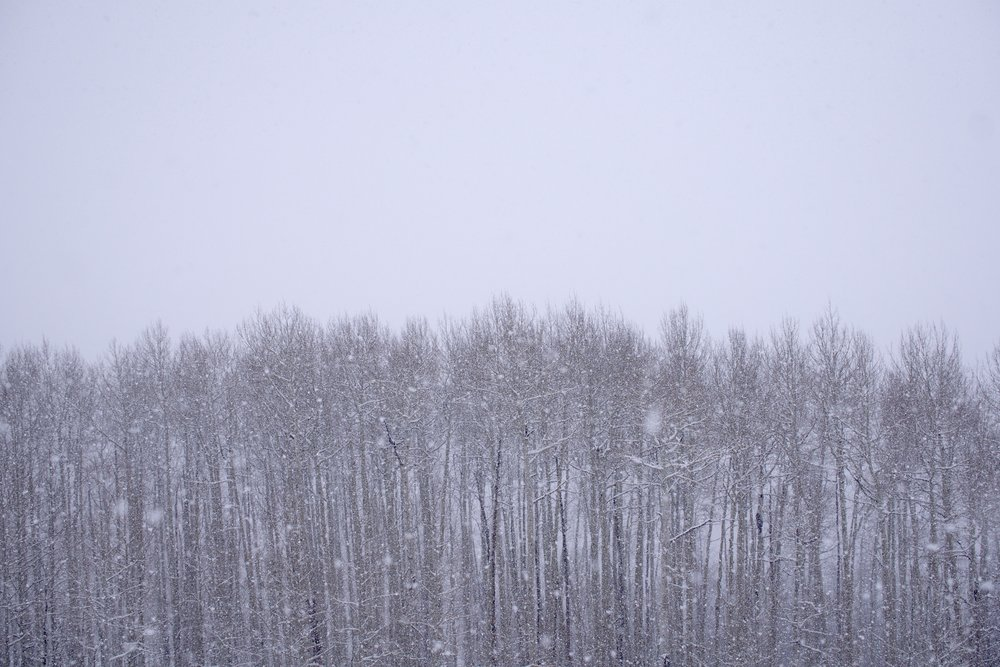 Aspen Whiteout.jpg