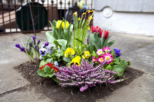 noticing, everyday beauty garden, walk, creativity awareness