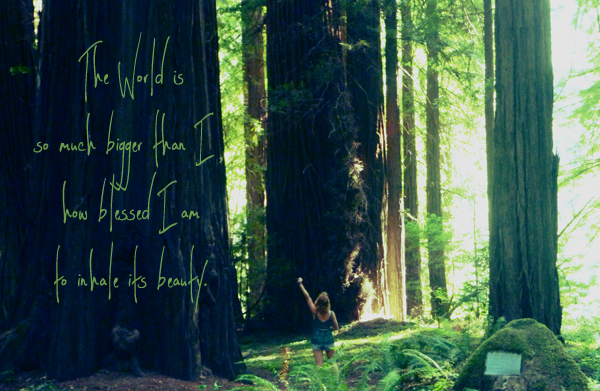 avenue of the giants, the world, blessed, travel, adventure, motivation, redwood, california