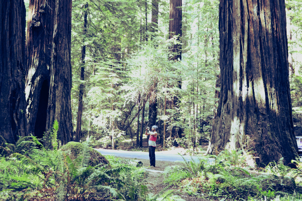 redwood, avenue of the giants, travel, road trip, adventure