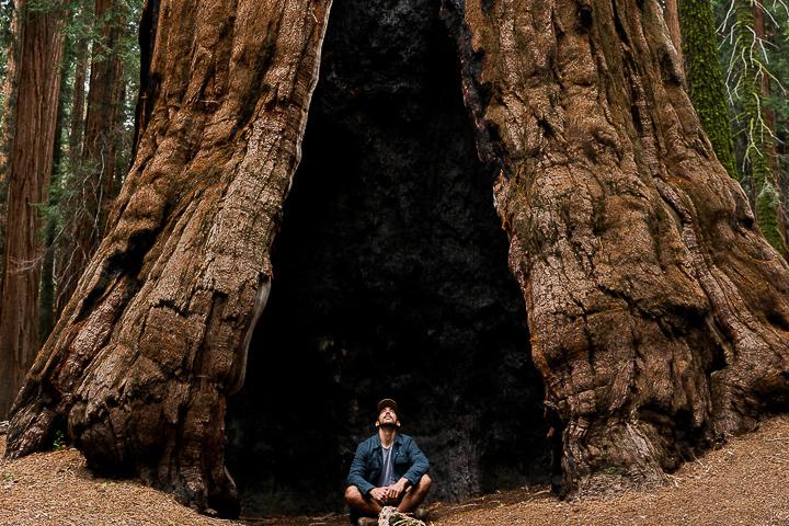 160612-Sequoia-0006-66.jpg