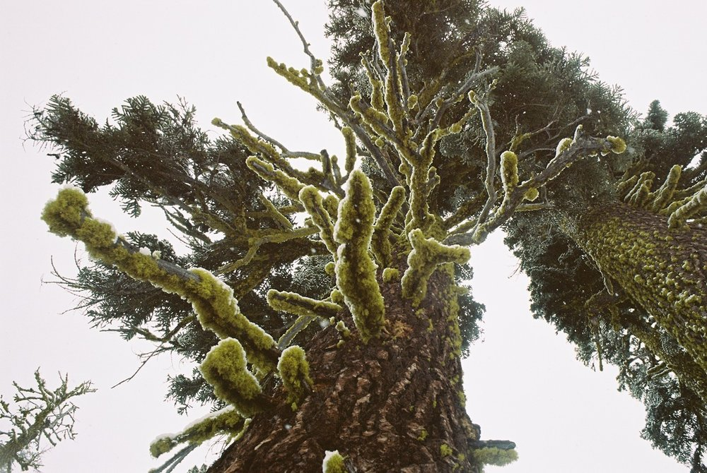 film photography by brittney garcia