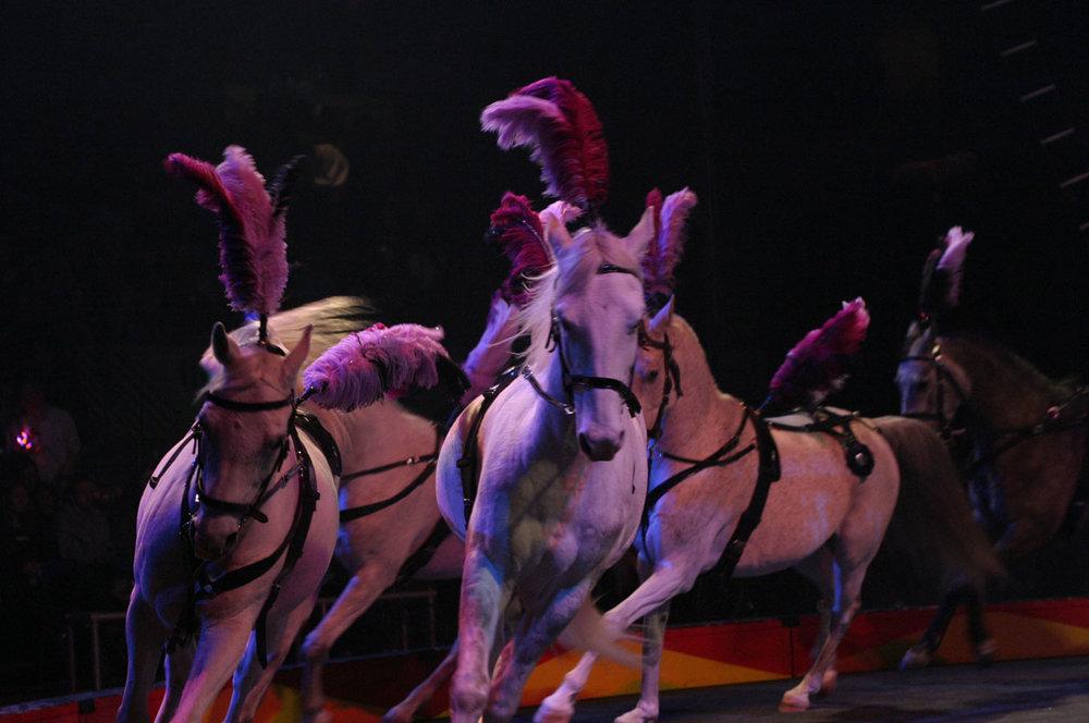 Horses - Erika Zerbini 3.jpg