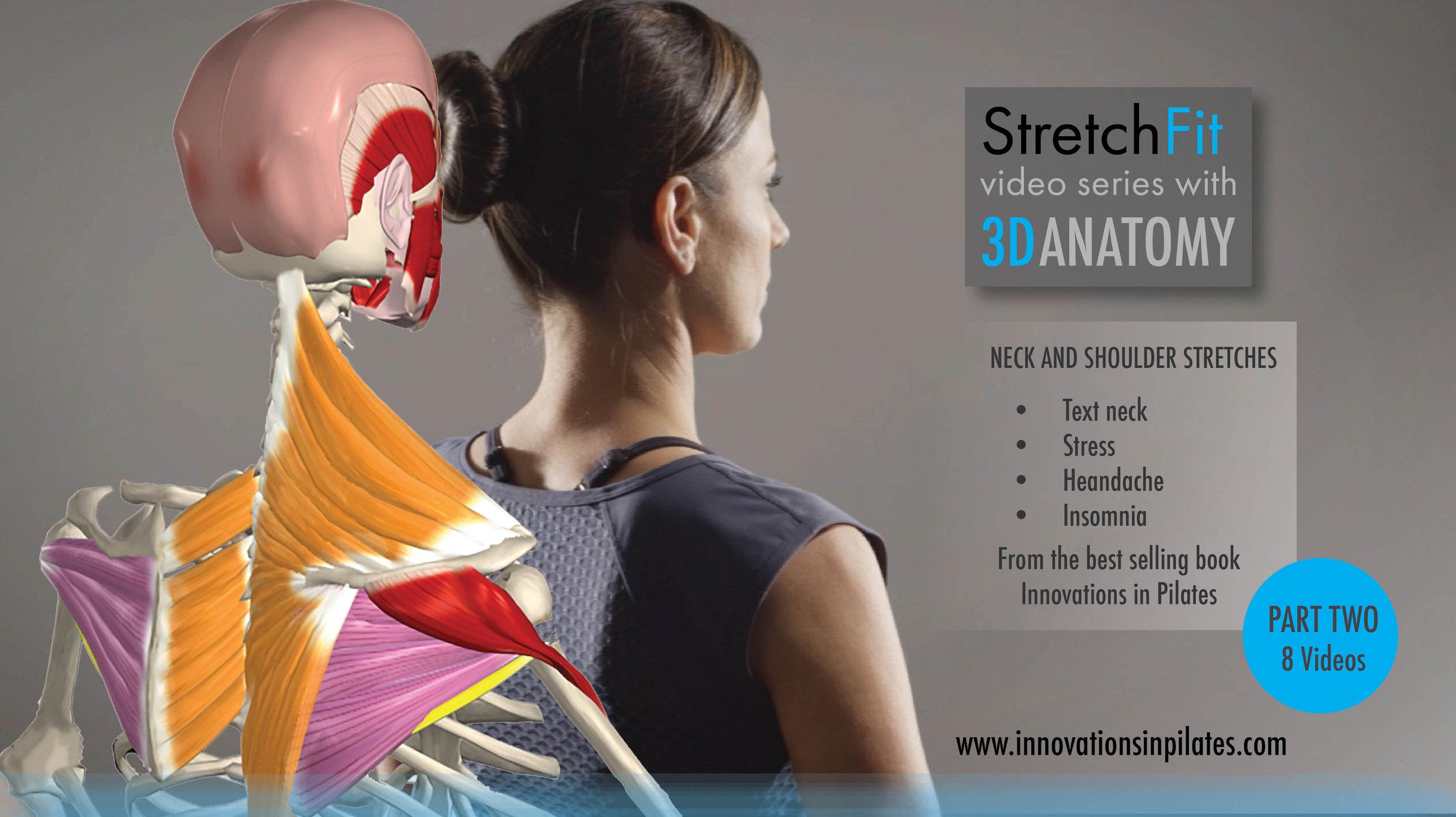 Stretchfit 3d Videos Neck Shoulders Part Two Stretchfit