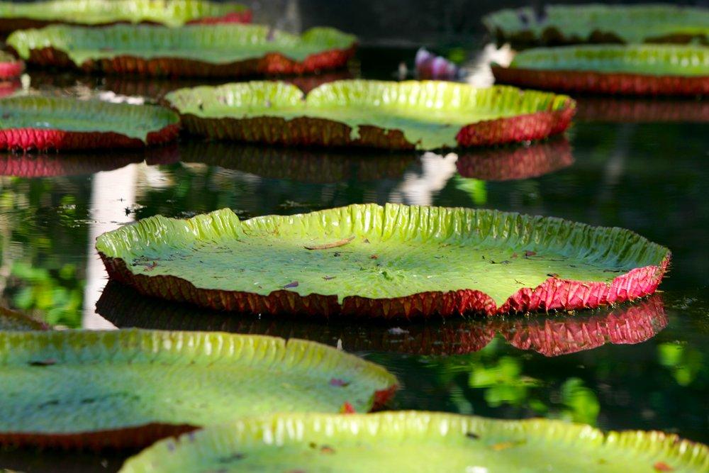 Pamplemousse Garden (1).jpg