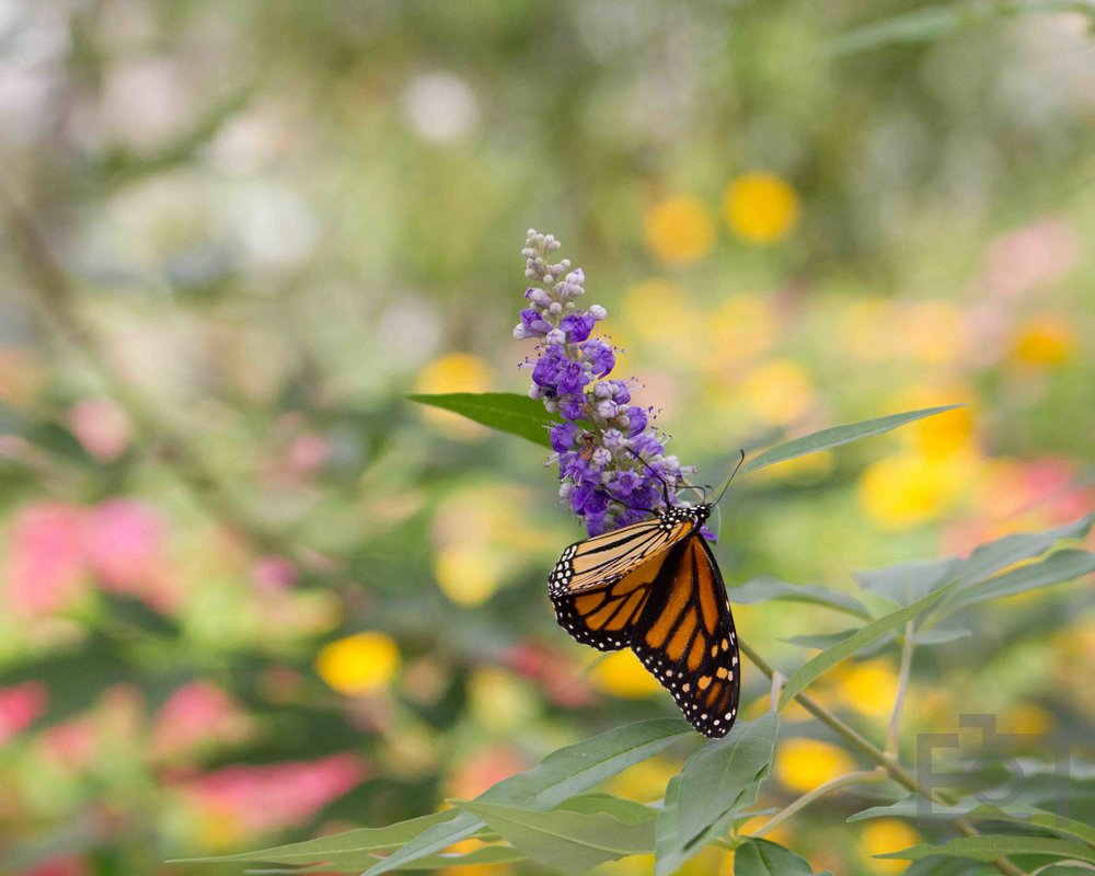 fordtographe-ericford-fineartphotography-butterfly