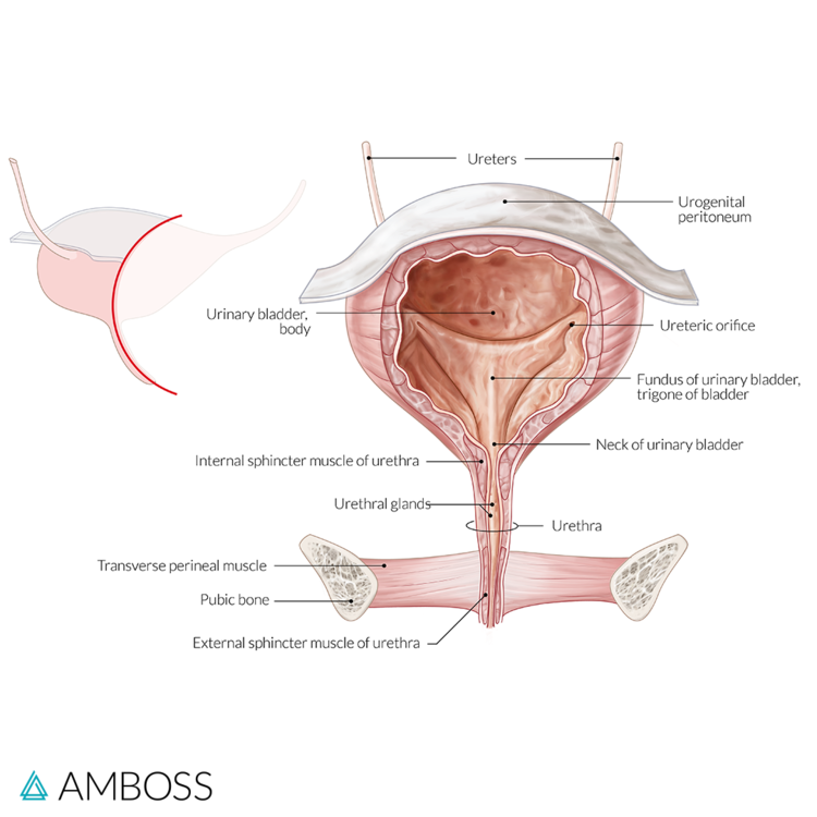 11 High Yield Topics You Can Expect On The Obgyn Exam Amboss