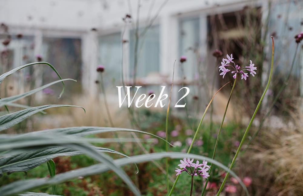 IL Mailchimp Week 2.jpg
