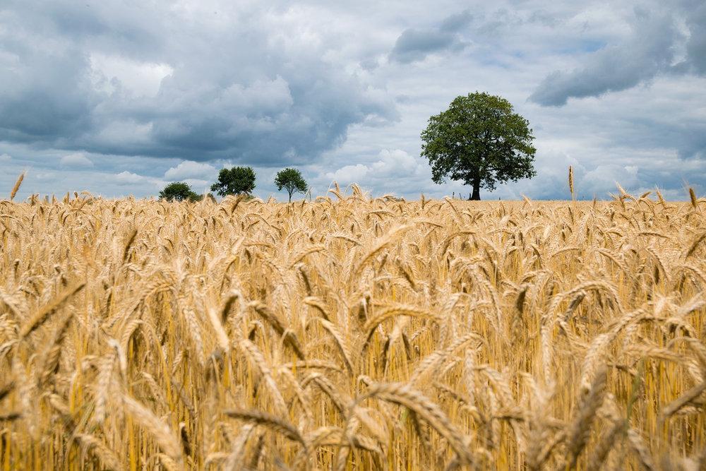 agriculture-2549245_1920.jpg