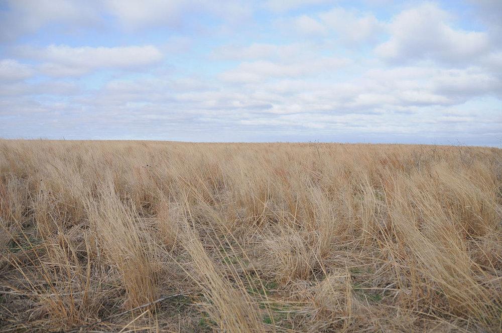 A wheat field outside Greensburg, Kansas. ( Photo: Wikimedia Commons/FEMA/John O'Shea )