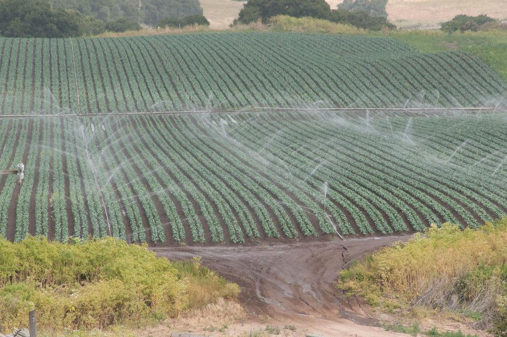 Sprinklers irrigating the Salinas Valley. ( Photo: USDA / Wikimedia Commons )