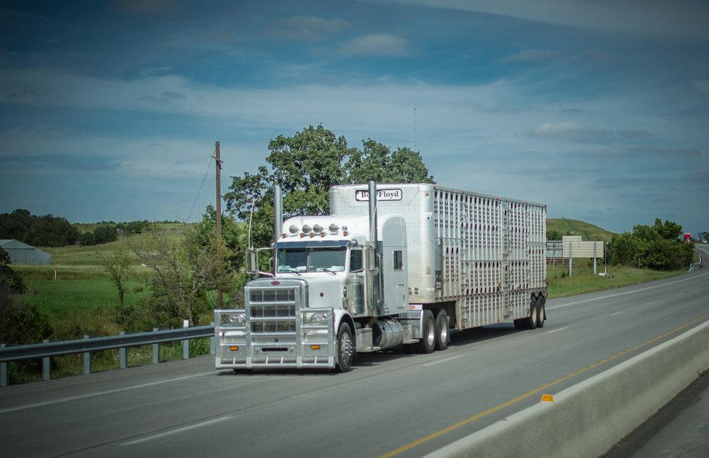 A livestock hauler. ( Photo: truckstockimages.com )