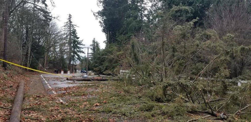 Wind damage in the Seattle area on Sunday, January 6, 2019.  (Photo: Puget Sound Energy)