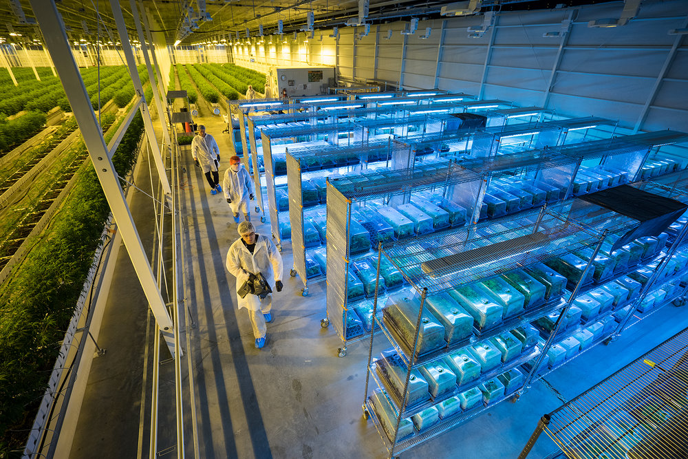 Aurora cannabis is increasing production at its aurora sky facility in alberta. credit: aurora cannabis