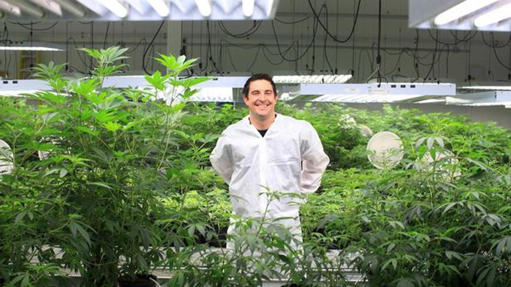 Canopy Growth sold more than 20,000 pounds of marijuana products during the third quarter of 2018. Image: Canopy Growth