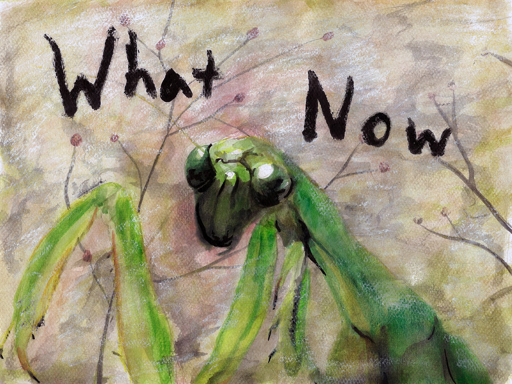 What Now: Mantis